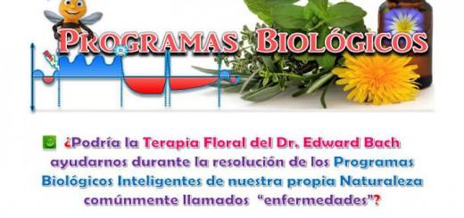 cartel terapia floral centro municipal Cordoba 2015