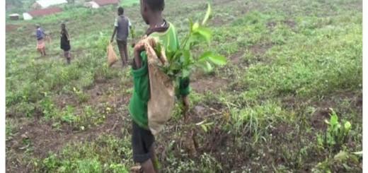 trabajo infantil Uganda 2016