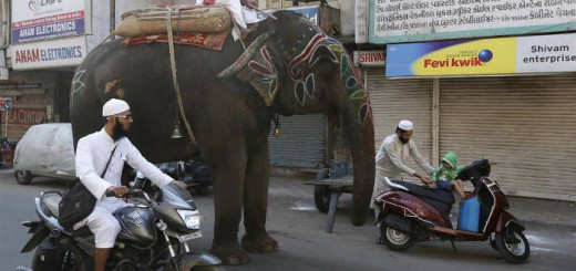 elefantes fiestas religiosas India 2016